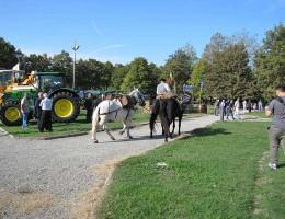 07-10-2012-pigiatura-A-066